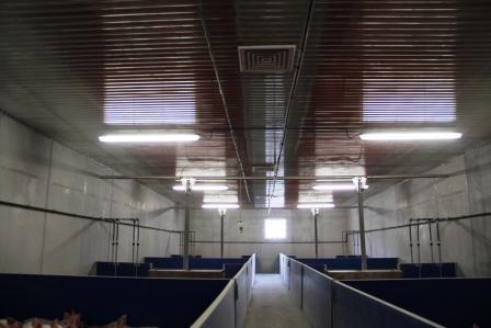 Diffuseurs d'air pvc CALOPOR dans une sale de 276 porcelets